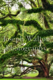 Joseph Walton Photography 11