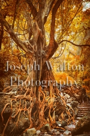 Joseph Walton Photography 15