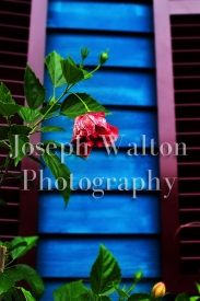 Joseph Walton Photography 50